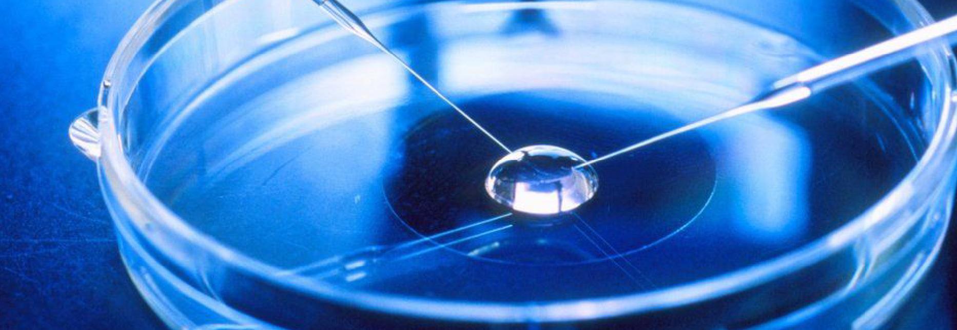 Infertility Treatment – Blastocyst Transfer